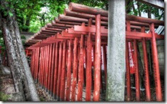 dboosterTorii TunnelTorii gates are always nice to look at. Their design is just really good. So if one torii is good, more must be even better, right I think so!Multiple torii gates as you see below are common at inari shrines